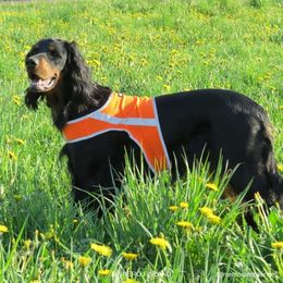 Neela wears ATTE attention vest size L photo: Suvi Salo / Mehtosalon kennel