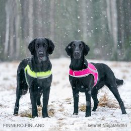 Rudi wears yellow (size XXL) and Senja and hers pink ATTE attention vest size XL photo: Juho Pajari / kennel Ninjatähden