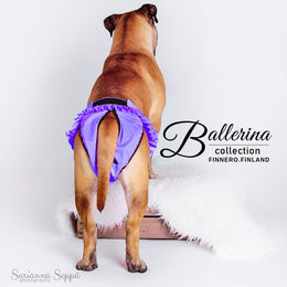 BALLERINA heat pants for dogs violet size L photo: Mastiff Mila and Sarianna Seppä