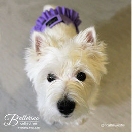 Cute Tica wears Ballerina heat pants photo: @ticathewestie