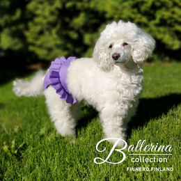BALLERINA heat pants for dogs violet size S (3) photo: Tuula Pekkala