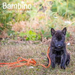 BAMBINO collar and leash Retro photo: Tiina Korhonen / TK Photography