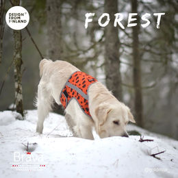 Max wears FOREST attention vest sixe XL photo:Sandra Varelius / @goldmax_