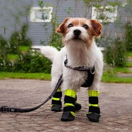 KURA protective booties for dogs photo: Linda Rasi /@ isla.linda