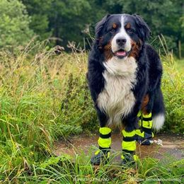 KURA protective boooties size XL photo: @romeo_bernesemountaindog