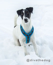 Nordic Lights Soft harness turquoise 35 cm photo: @divathedog