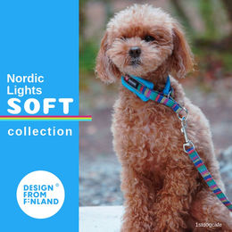 Nordic Lights Soft collar turquoise