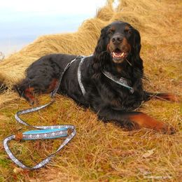 OCEAN leash and harness turquoise  photo: Suvi Salo / Mehtosalon kennel