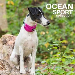 Diva wears OCEAN adjustable collar with fuchsia padding and size S photo: Tiina Korhonen/@Tassutteluayhdessa