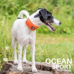 OCEAN adjustable collar size S and orange removable neoprene padding phoro: Tiina Korhonen / @Tassutteluayhdessa