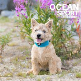 Elli wears OCEAN adjustable collar size S: Tiina Korhonen / T.K Photography