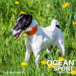 OCEAN SPORT adjustable collar with orange padding photo: Tiina Korhonen / @tassutteluayhdessa