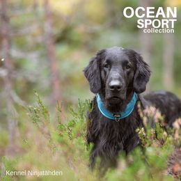 Rudi and his new Ocean collar size L photo : Kennel Ninjatähden