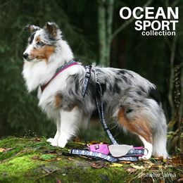 Ocean harness size 35 cm and matching leash photo: @sheltie_alma/Jenni Juhajoki