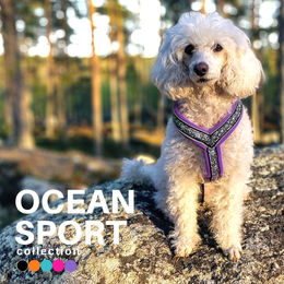 Fiona wears violet OCEAN sport harness size 35 cm photo: Tuula Pekkala
