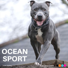 Ramsey and Ocean sport collar photo: Jason Ashley / @bluestaffy Ramsey