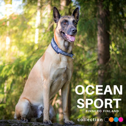 Indy wears black OCEAN sport collar size 5 photo: Tiina Korhonen / @tassutteluayhdessa