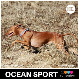 OCEAN SPORT collar orange photo: Jorma Ylinen