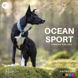 Bordercollie Raf have OCEAN SPORT collar with turquoise padding size 2 photo: Miikku Pietilä @miikkuvaan