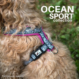 OCEAN harness pink photo : The Cotswold Spaniels
