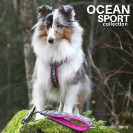 Ocean harness and leash photo: sheltie_alma/Jenni Juhajoki