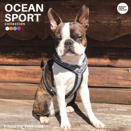 Pepe and OCEAN harness photo: Sanna Perälä / @pepe_the_boston