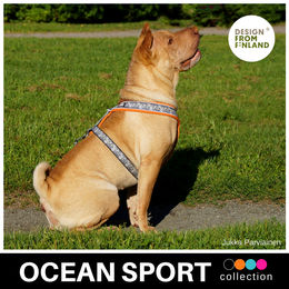 OCEAN SPORT harness orange photo:Jukka Parviainen