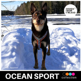 OCEAN Sport Y harness orange photo: Kiia Jäppinen