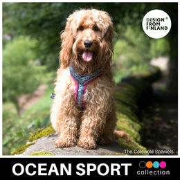 OCEAN SPORT harness pink photo: The Cotswold Spaniels