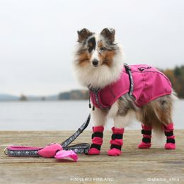 Alma loves pink. She wears harness size 35 cm and coat size 40 cmphoto: sheltie_alma / Jenni Juhajoki