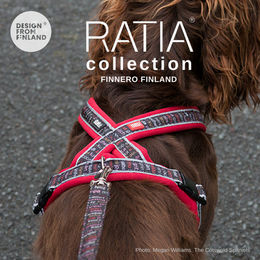 Woody wears red RATIA 8 shape harness size 45 cm photo: Megan Williams - The Cotswold Spaniels blog