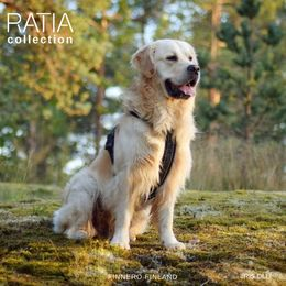 Onni and his Ratia 8 shape harness size 60 cm photo: Iiris Olli