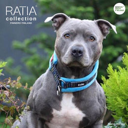 Ramsey have RATIA Grafico collar with very soft turquoise padding photo: Jason Ashley