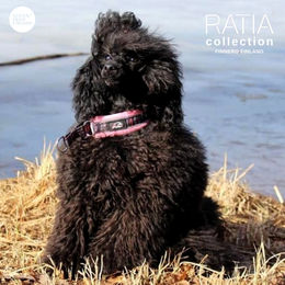 Söpö wears pink RATIA collar size 0 photo: cicithepoodle