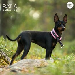 Wisla and RATIA pink soft collar size 0 photo: @terrieritytot