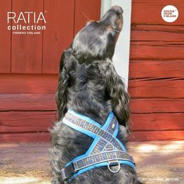 Becu wears RATIA 8 shape harness turquoise and size 50 cm photo: Suvi Salo / Mehtosalon kennel
