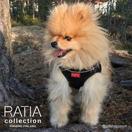 Rölli and Ratia vest harness size XS photo: @rollithepommi