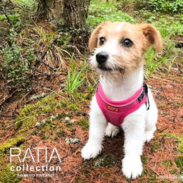 Cute Isla wears pink RATIA vest harness size XXS photo: @isla.linda/Linda Rasi