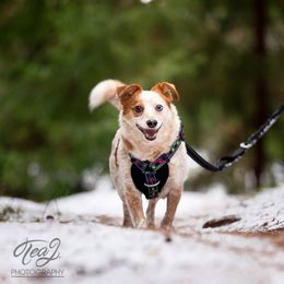 RESCUE harness photo: Tea J Photography