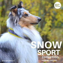 Yellow Snow Sport collar size 3 photo: Julia Hannula / @roughcollielumi