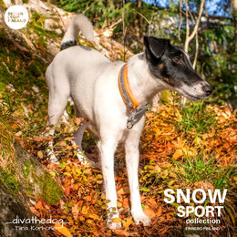 SNOW SPORT collar with orange padding photo: Tiina Korhonen / _divathedog_