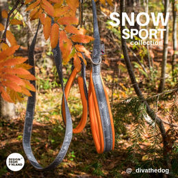 SNOW SPORT orange leash and collar photo: @_divathedog_