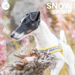 Diva wears yellow SNOW T- harness size 1,5 photo: @tassutteluayhdessa / Tiina Korhonen