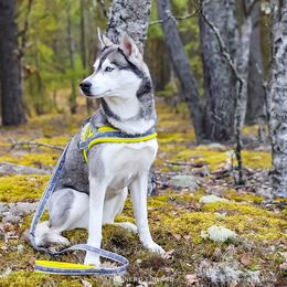 Inka have yellow SNOW harness size 3 photo: @inkajavanilla / Amira Ibrahim