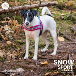 Diva wear SNOW SPORT pink harness size 1,5 photo: Tiina Korhonen /_divathedog_