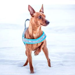 Viljo wears turquoise SNOW harness photo: Tiina Korhonen / Tassutteluayhdessa