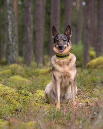 RATIA Soft collar lime photo:J.Lindfors Photography