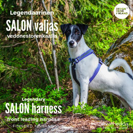 Salon harness violet photo: Tiina Korhonen / _divathedog_
