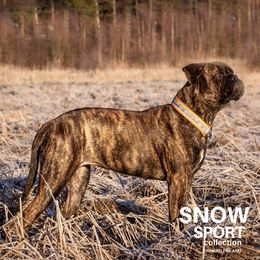 Caro and hers orange SNOW SPORT collar size 6 photo: Sarianna Seppä