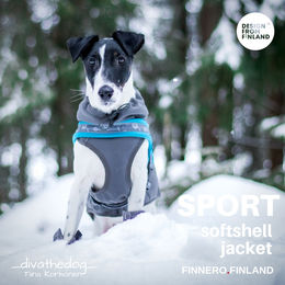 Diva wears SPORT softshell jacket grey size 40 cm and SNOW T shape harness size 1,5 photo: Tiina Korhonen / _divathedog_